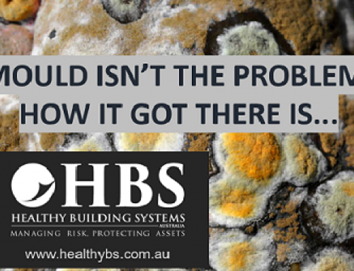 Mould….What You Need To Know.